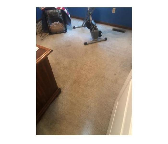 bedroom carpet, lighter color, with many discolored marks/stains