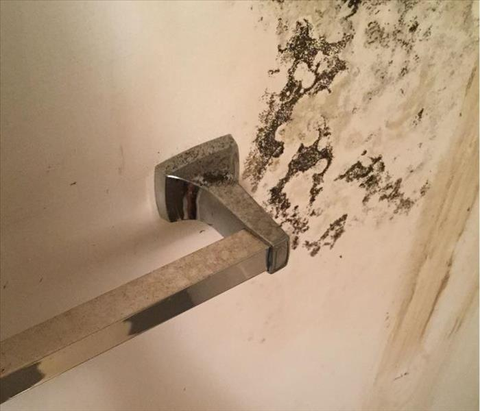 Bathroom wall with mold in black color