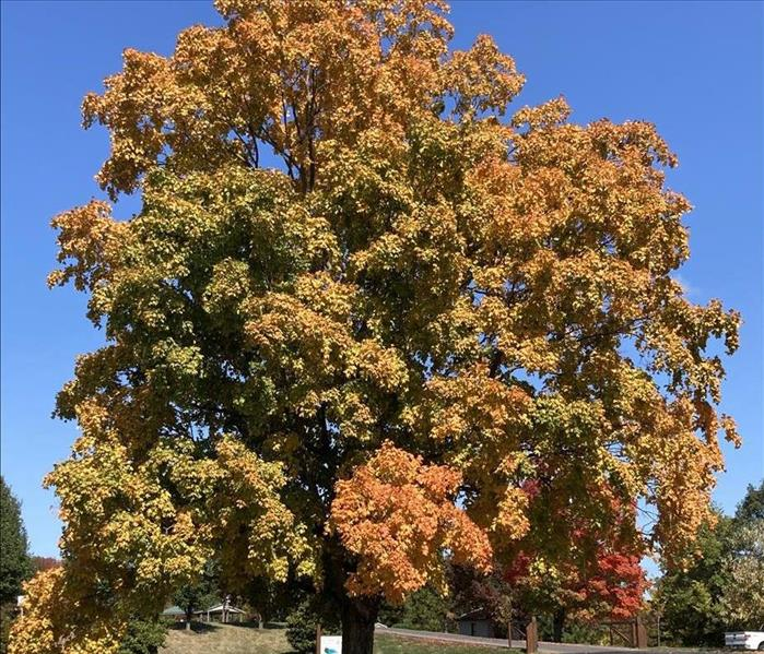 Large tree with green, yellow, and orange leaves in the fall with blue sky background